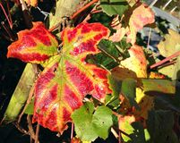 Autumn or fall leaf. Orange color. Stock Photo