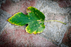 Autumn fall leaf texture background Royalty Free Stock Image