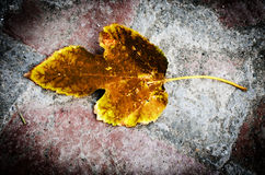 Autumn fall leaf texture background Royalty Free Stock Images