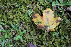 Autumn Fall Leaf Yellow and Orange on Moss Lawn stock photography