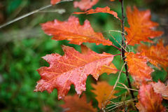 Autumn Fall Leaves Stock Image