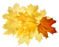 Autumn fall leaves stock image