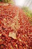 Autumn fall leaves Royalty Free Stock Images