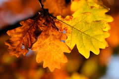 Autumn fall leaves Stock Images