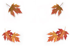 Autumn fall leaves 5. Stock Image