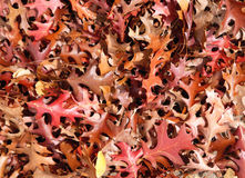 Autumn or fall leaves background Stock Photography