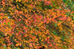 Autumn, fall leaves background. Colorful and bright autumn, fall leaves nature background Stock Photo