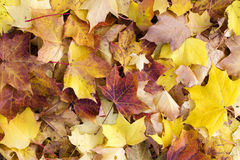 Autumn or fall leaves background Stock Photo