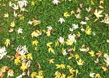Autumn fall leaves background Stock Image