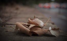 Autumn Fall Leaves Background Scene. Dry Autumn Fall Leaves Background Scene Stock Images