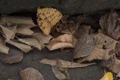Autumn Fall Leaves Background Scene. Dry Autumn Fall Leaves Background Scene Stock Photos