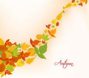 Autumn fall leaves background Royalty Free Stock Photography