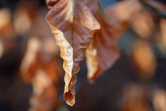 Autumn fall leaves. Beautiful coloured leaves in autumn, fall in a forest stock images