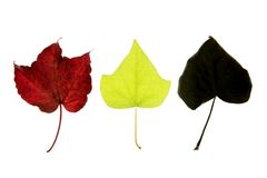 Autumn, fall leaves decorative still over white Stock Photography