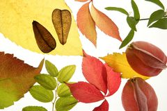Autumn, Fall Leaves Decorative Still Over White Stock Photos