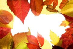 Autumn, fall leaves decorative still at studio. White background, using the transparency stock photo