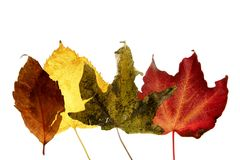 Autumn, fall leaves decorative still at studio Royalty Free Stock Photos