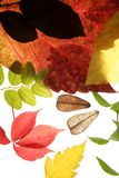 Autumn, fall leaves decorative still at studio Royalty Free Stock Images