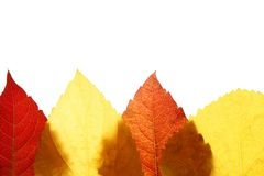 Autumn, fall leaves decorative still at studio Stock Photo