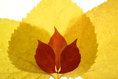Autumn, fall leaves decorative still at studio Stock Image