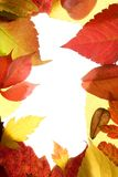 Autumn, fall leaves decorative still at studio Stock Images