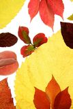 Autumn, fall leaves decorative still at studio Royalty Free Stock Photography