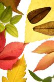 Autumn, fall leaves decorative still at studio Stock Photos
