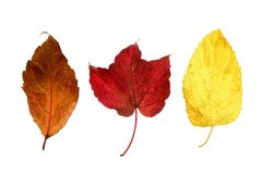 Autumn, fall leaves decorative still at studio Stock Photography