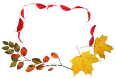 Autumn fall leaves frame Royalty Free Stock Images
