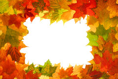 Autumn fall leaves frame Stock Images