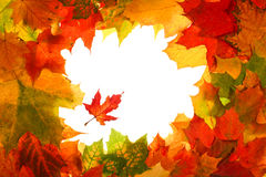 Autumn fall leaves frame Stock Photo