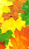 Autumn fall leaves - frame Stock Photos