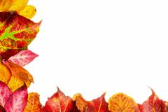 Autumn fall leaves frame border Royalty Free Stock Images