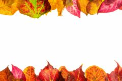 Autumn fall leaves frame border Royalty Free Stock Photos
