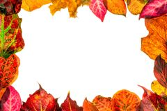 Autumn fall leaves frame border Stock Photos