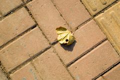The leaves on the ground Royalty Free Stock Photography