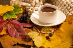 Autumn, fall leaves, a hot cup of coffee and a warm scarf on the background of a wooden table. Seasonal, morning coffee, Sunday re. Laxing and still-life concept stock photos
