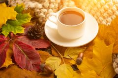 Autumn, fall leaves, a hot cup of coffee and a warm scarf on the background of a wooden table. Seasonal, morning coffee, Sunday re. Laxing and still-life concept stock image