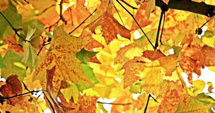 Autumn, Fall Leaves, Leaves royalty free stock photos