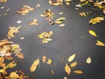 Autumn Fall Leaves op Seizoen van het Straat het Stedelijke Milieu stock afbeeldingen