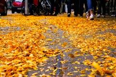Autumn Fall Leaves Piled amarillo en la acera de la calle urbana rodea Fotografía de archivo