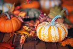 Autumn, fall leaves pumpkins background. Autumn, fall leaves pumpkins and gourds background Royalty Free Stock Photography
