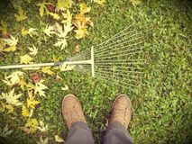 Autumn fall leaves rake background Royalty Free Stock Photo