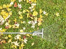 Autumn fall leaves rake background Stock Photo