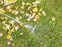 Autumn fall leaves rake background Royalty Free Stock Image