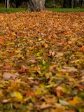 Autumn (fall) leaves in Rosenstein Park, Stuttgart Stock Images