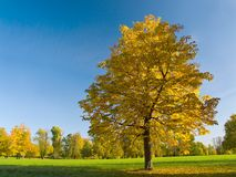 Autumn (fall) leaves in Rosenstein Park, Stuttgart Royalty Free Stock Photo