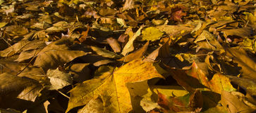 Autumn (fall) leaves in Rosenstein Park, Stuttgart Stock Photography