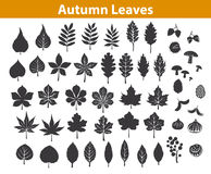 Autumn fall leaves silhouettes set in black color. Maple chestnut ash oak birch gum beech walnut rowan elm trees foliage. leafs are included as art brushes in Royalty Free Stock Photo