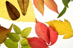 Autumn, fall leaves still over white Stock Photo